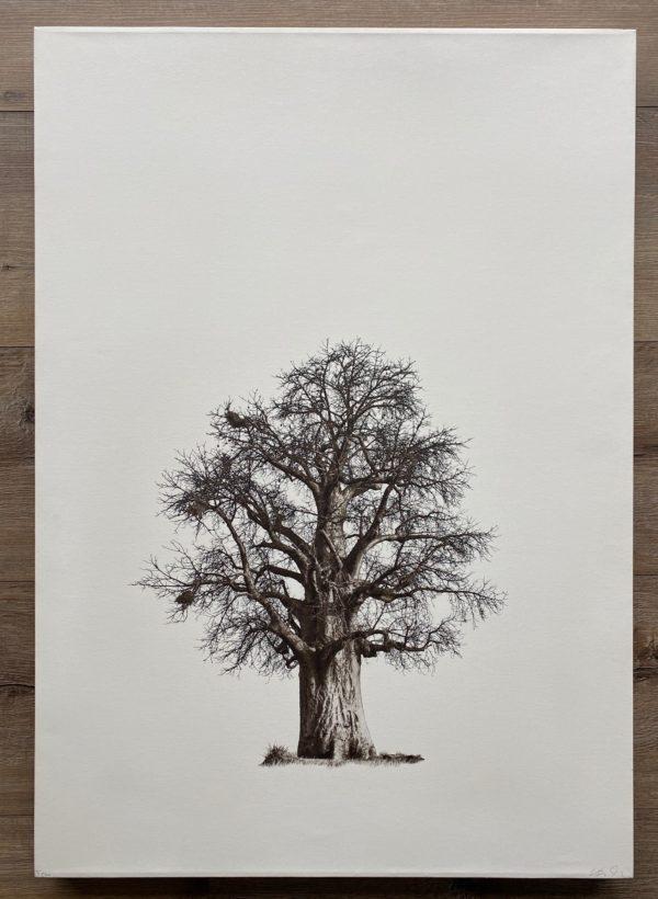 Klaus Tiedge Baobab Courage Auction 1